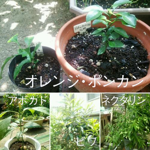 0819_fruits01