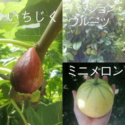 0819_fruits02
