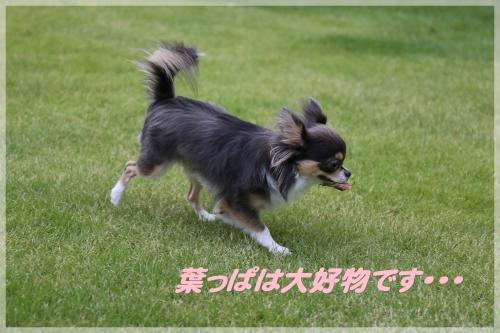 IMG_5764_convert_20161018190545.jpg