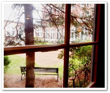 カフェからの眺め中庭