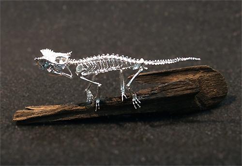 ブリゴーヒメカメレオン Brookesia brygooi