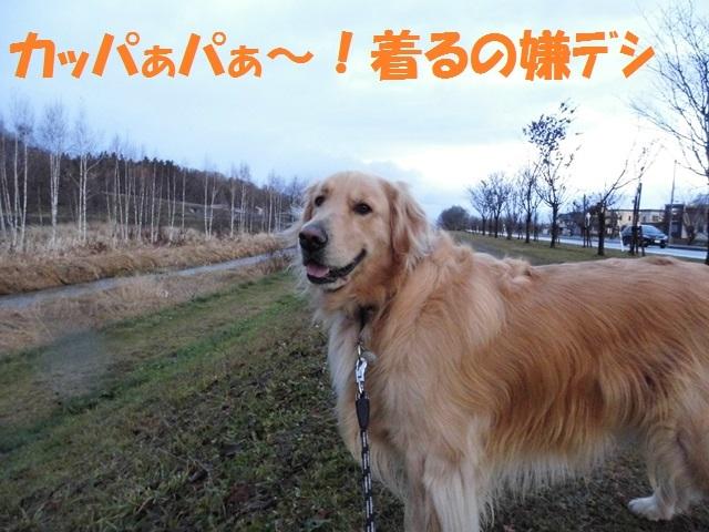CIMG2780_P.jpg