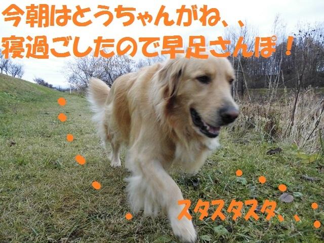 CIMG2781_P.jpg