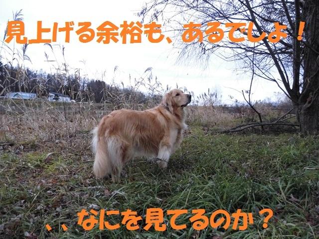 CIMG2783_P.jpg