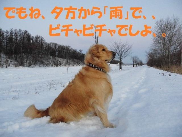 CIMG2833_P.jpg