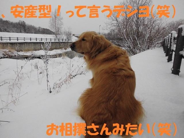 CIMG2866_P.jpg