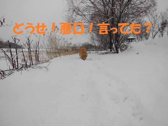 CIMG2867_P.jpg