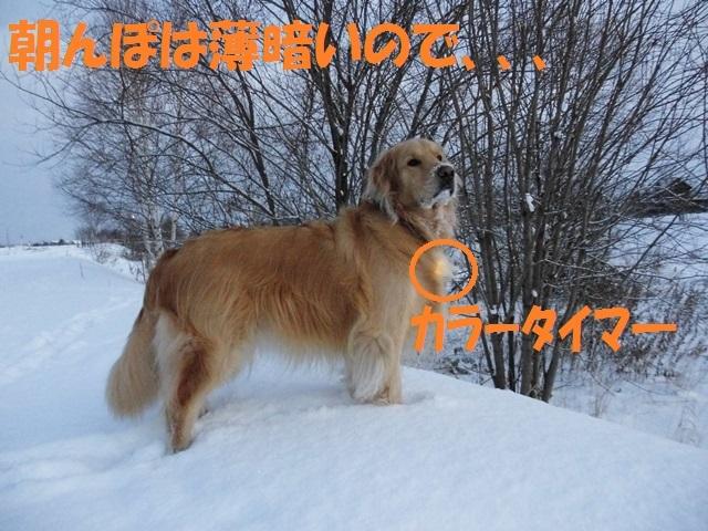 CIMG2869_P.jpg