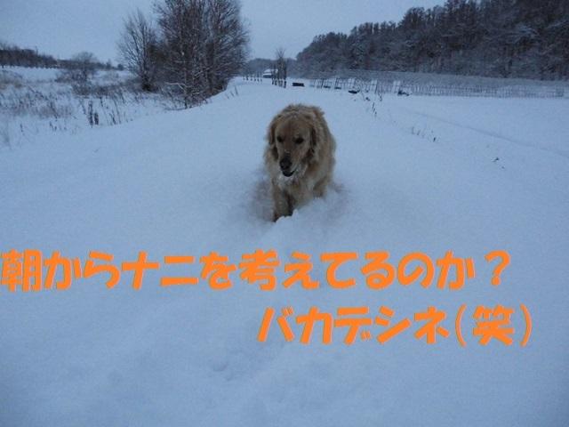 CIMG2892_P.jpg