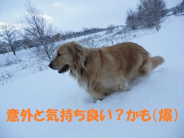 CIMG2894_P.jpg