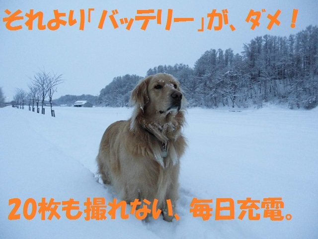 CIMG2907_P.jpg