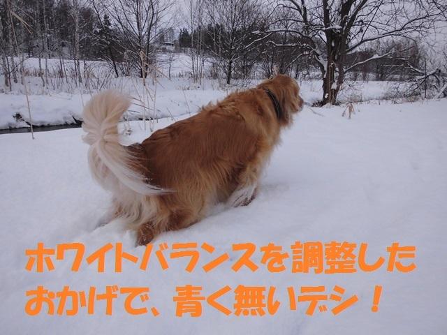 CIMG2911_P.jpg