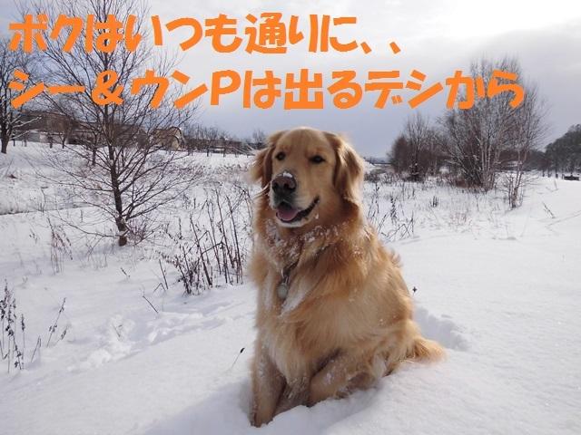 CIMG2938_P.jpg