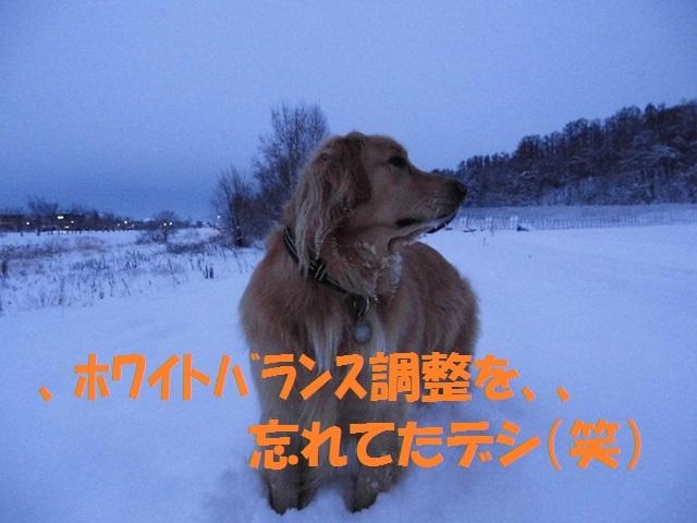 CIMG2961_P.jpg
