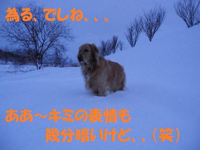 CIMG2974_P.jpg