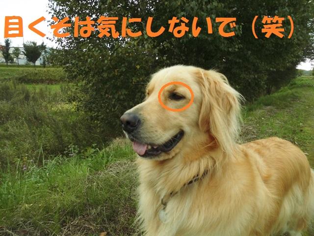 CIMG3293_P.jpg