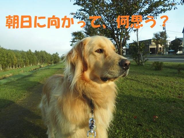 CIMG3310_P.jpg