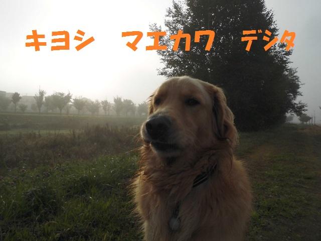 CIMG3324_P.jpg