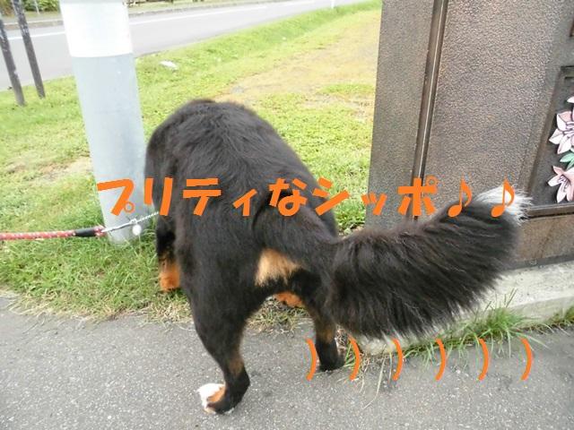 CIMG3382_P.jpg