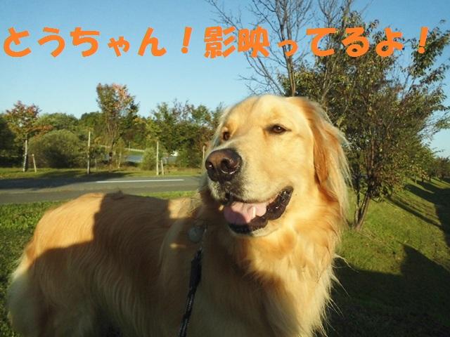 CIMG3394_P.jpg