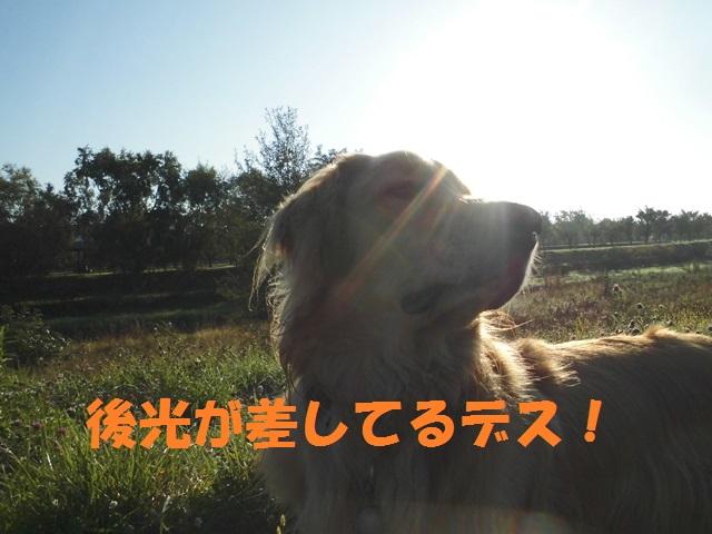 CIMG3403_P.jpg