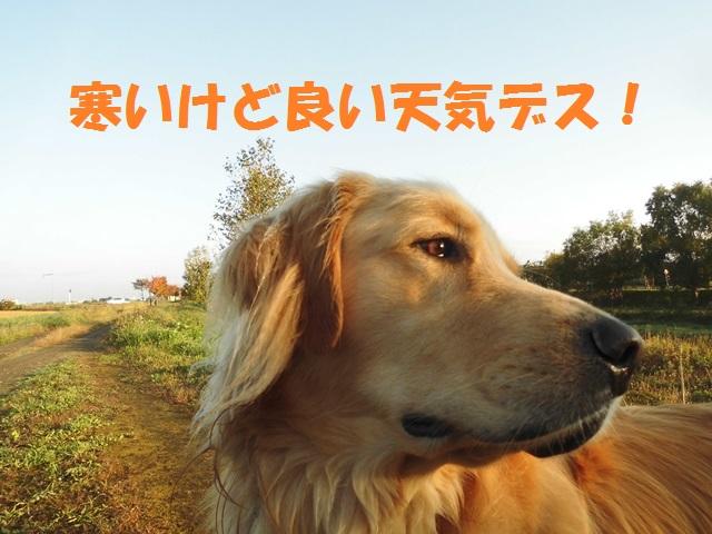 CIMG3421_P.jpg