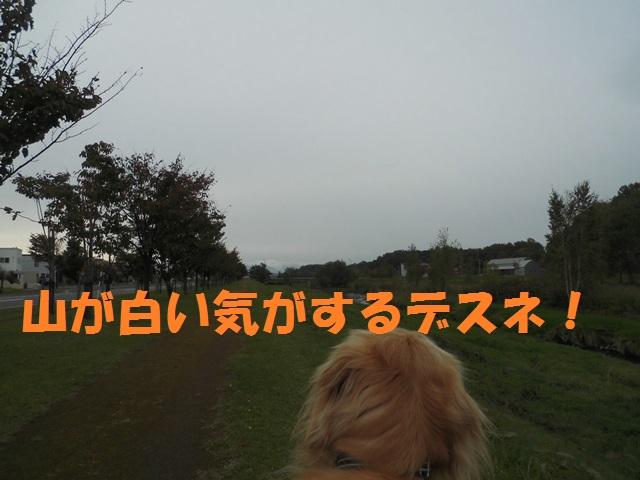 CIMG3433_P.jpg