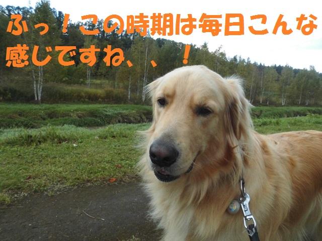 CIMG3493_P.jpg