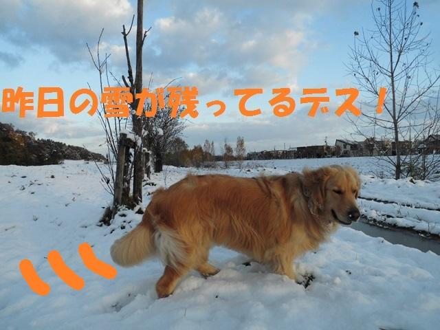 CIMG3576_P.jpg
