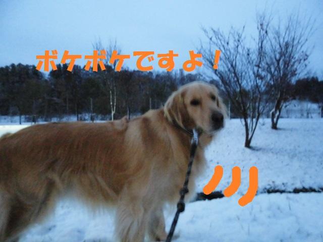 CIMG3606_P.jpg