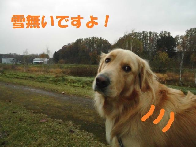 CIMG3610_P.jpg