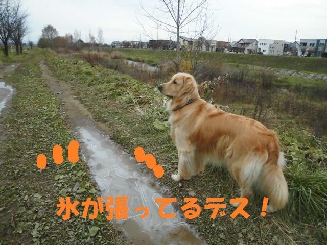 CIMG3634_P.jpg