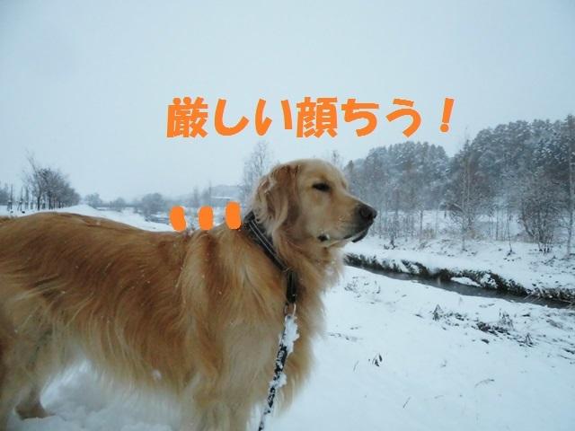 CIMG3646_P.jpg