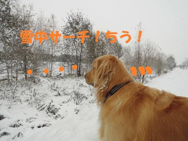 CIMG3648_P.jpg
