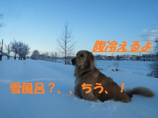 CIMG3656_P.jpg