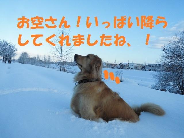 CIMG3657_P.jpg