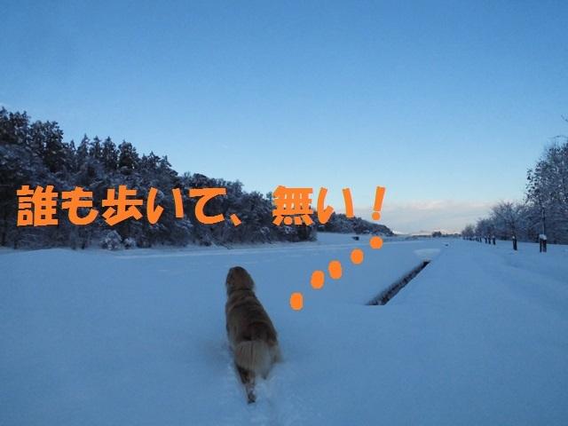 CIMG3659_P.jpg