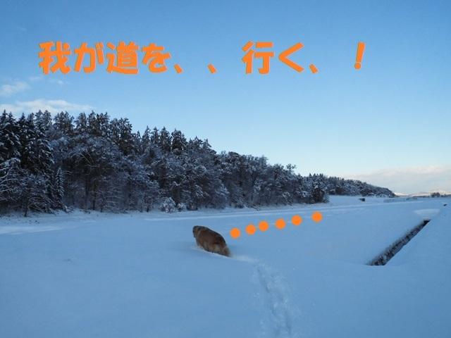 CIMG3660_P.jpg