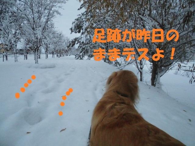 CIMG3677_P.jpg