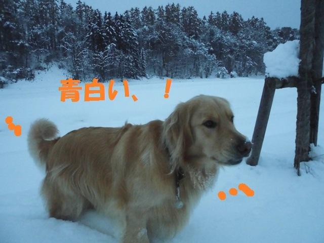 CIMG3684_P.jpg