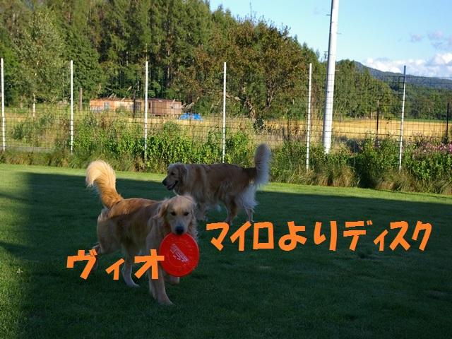 IMGP0077_P.jpg