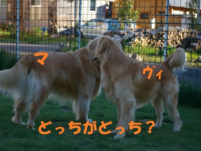 IMGP0115_P.jpg