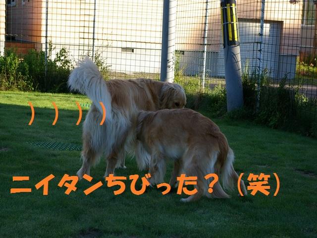 IMGP0136_P.jpg