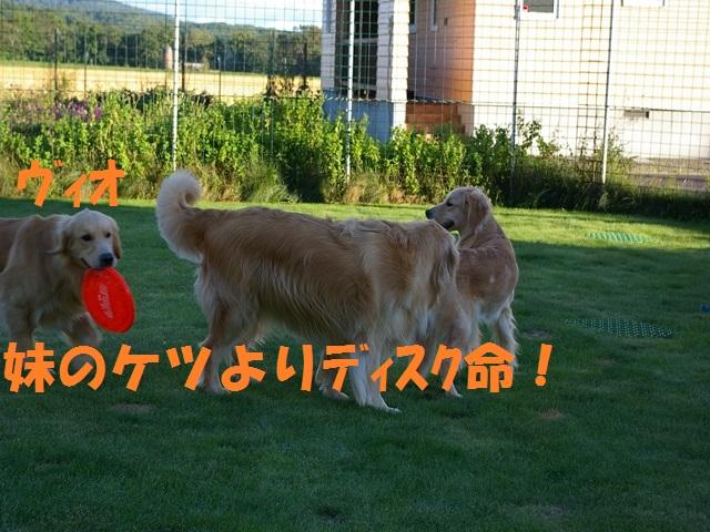 IMGP0148_P.jpg