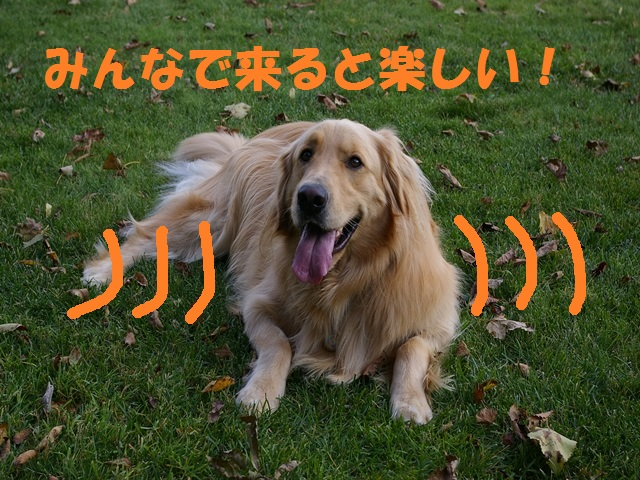 IMGP0436_P.jpg