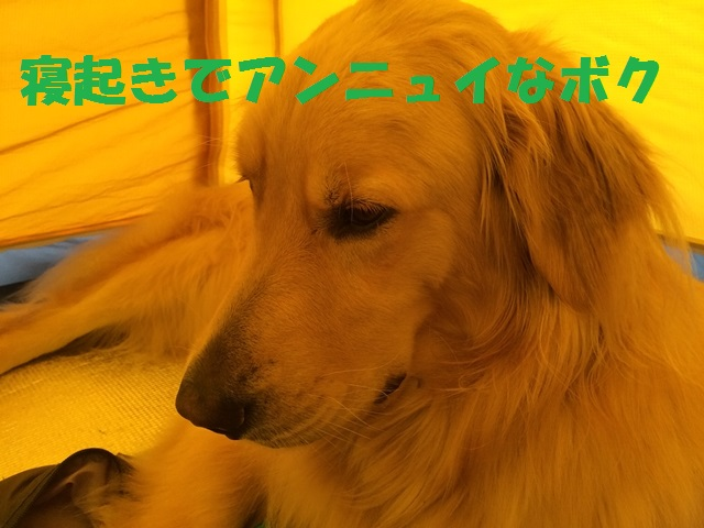 IMG_8965_P.jpg