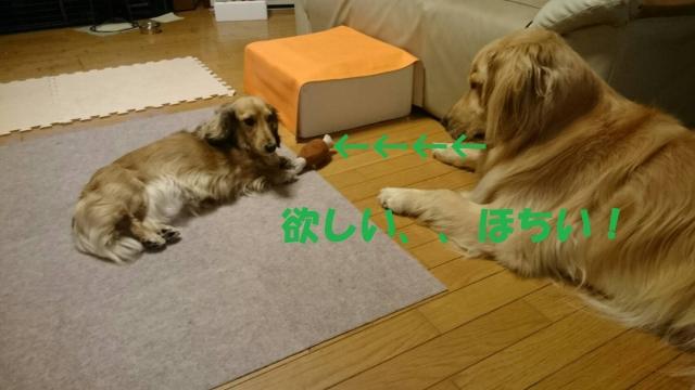 IMG_9141.jpg