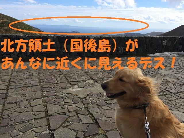 IMG_9736_P.jpg