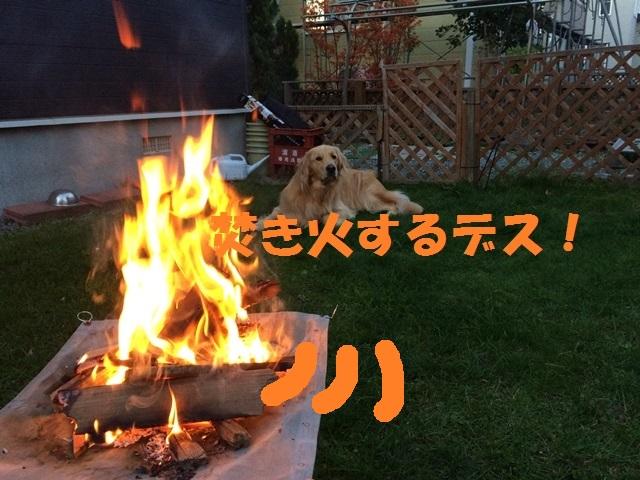IMG_9802_P.jpg