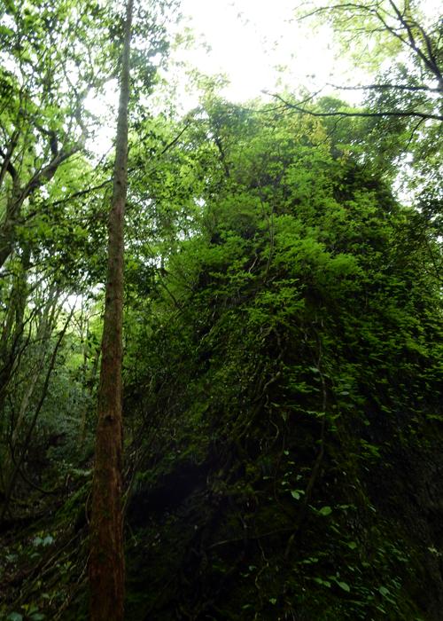 2016,5,8郡岳-16